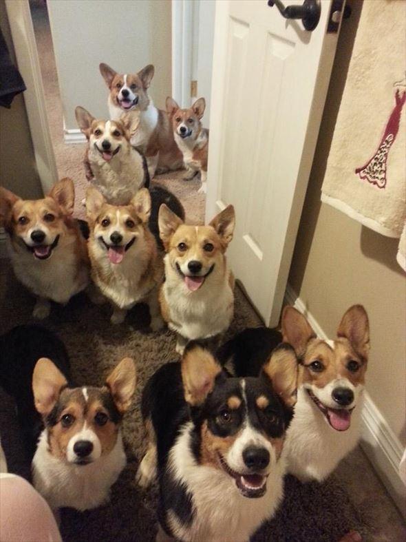 おもしろ犬画像 5