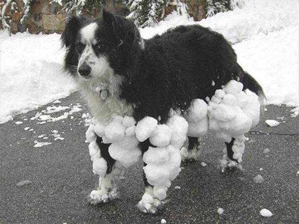 おもしろ犬画像 58