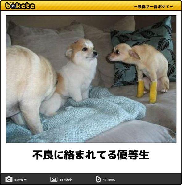 おもしろ犬画像 59