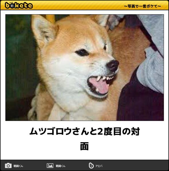 おもしろ犬画像 60