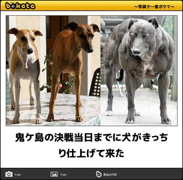 おもしろ犬画像 61