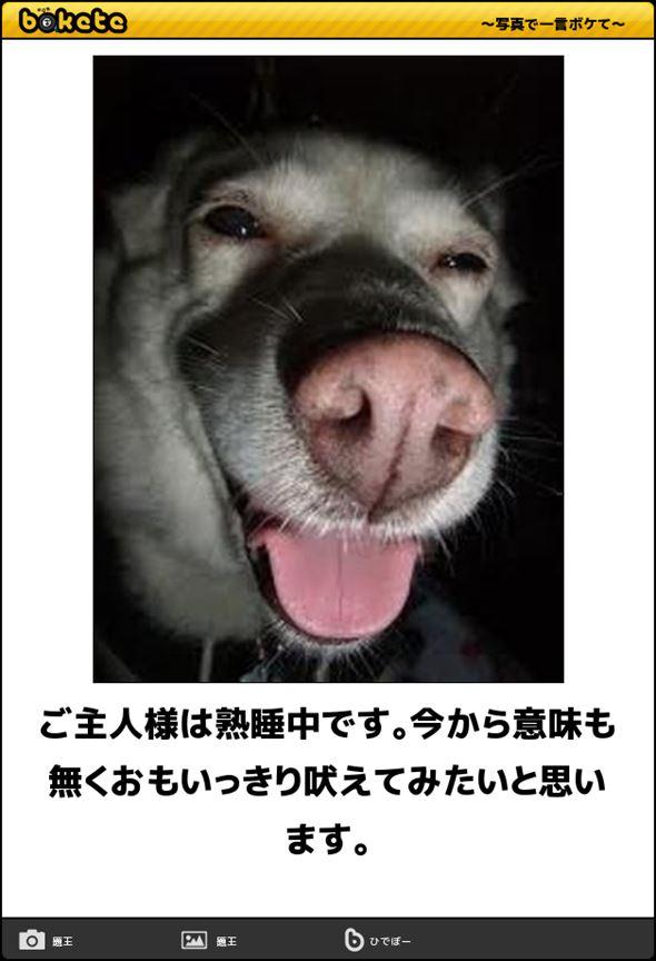 おもしろ犬画像 62