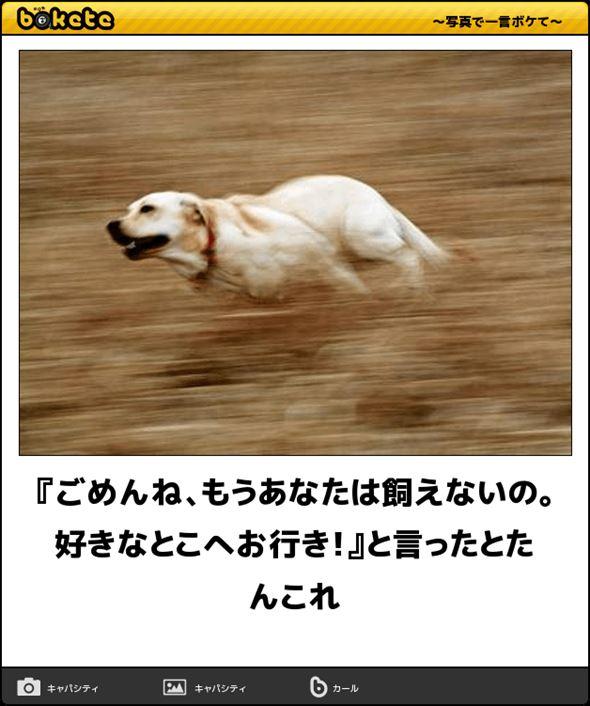 おもしろ犬画像 63