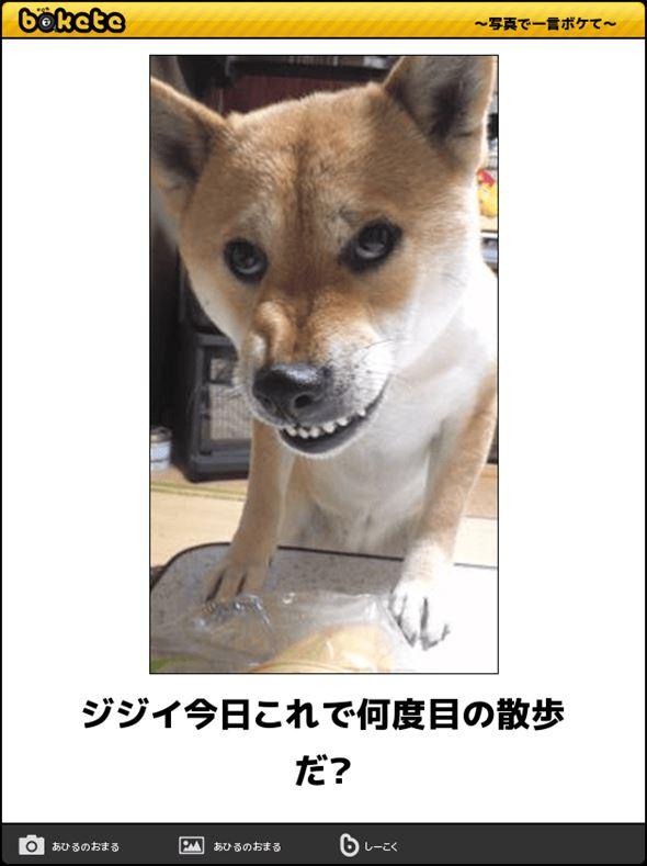 おもしろ犬画像 64