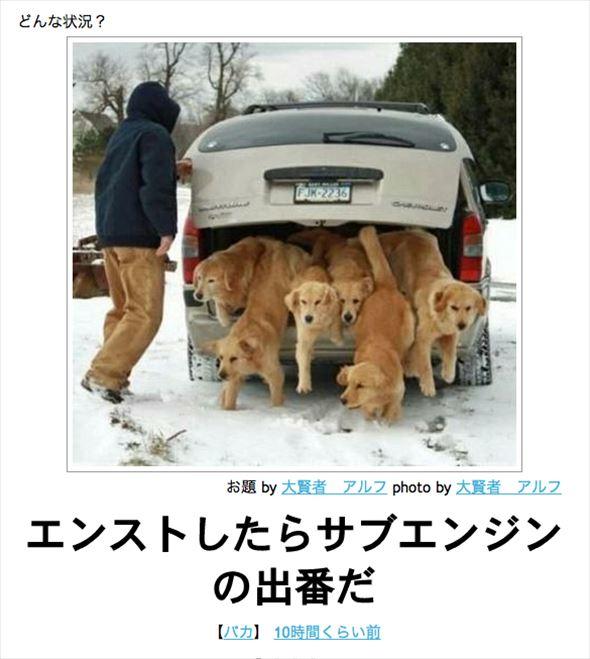 おもしろ犬画像 65