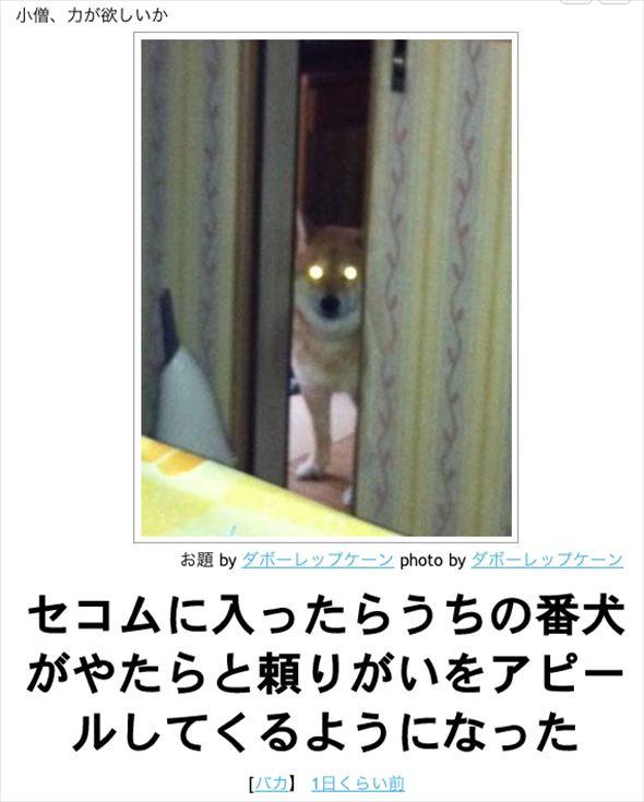 おもしろ犬画像 68