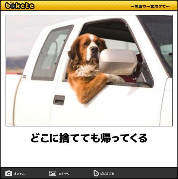 おもしろ犬画像 70