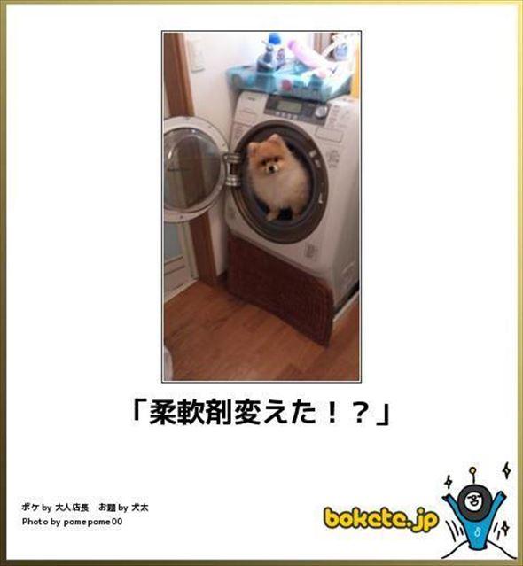 おもしろ犬画像 71
