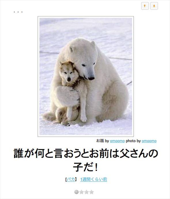 おもしろ犬画像 74