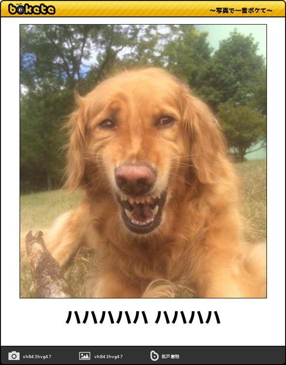 おもしろ犬画像 77