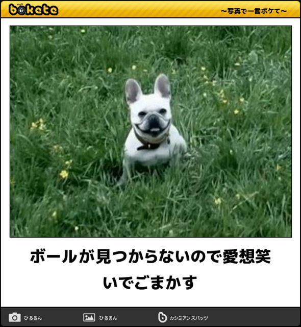 おもしろ犬画像 79