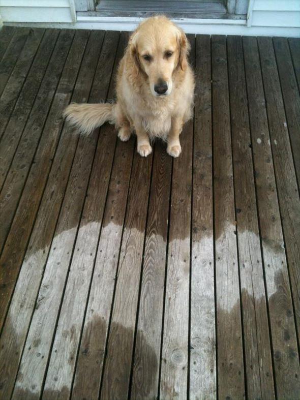 おもしろ犬画像 8