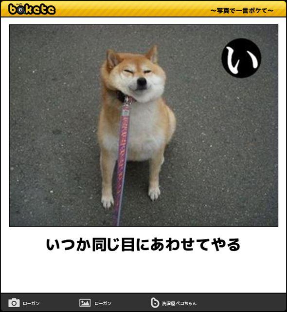 おもしろ犬画像 81