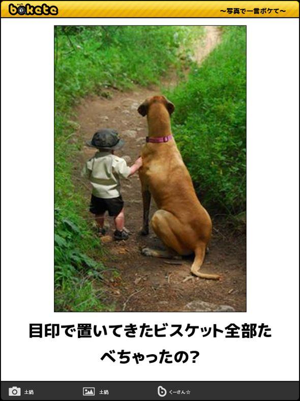 おもしろ犬画像 82