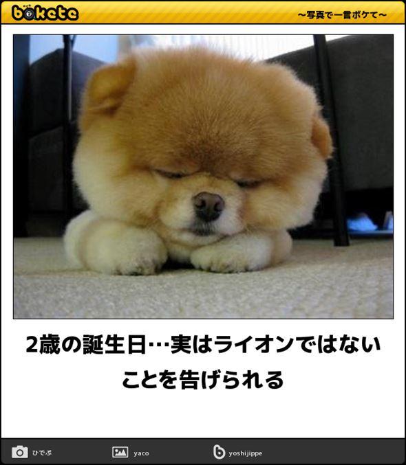 おもしろ犬画像 83