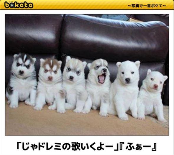 おもしろ犬画像 85