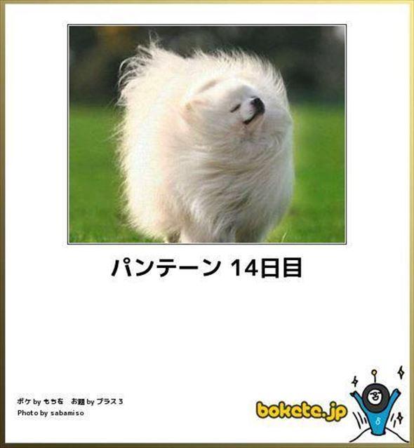 おもしろ犬画像 86