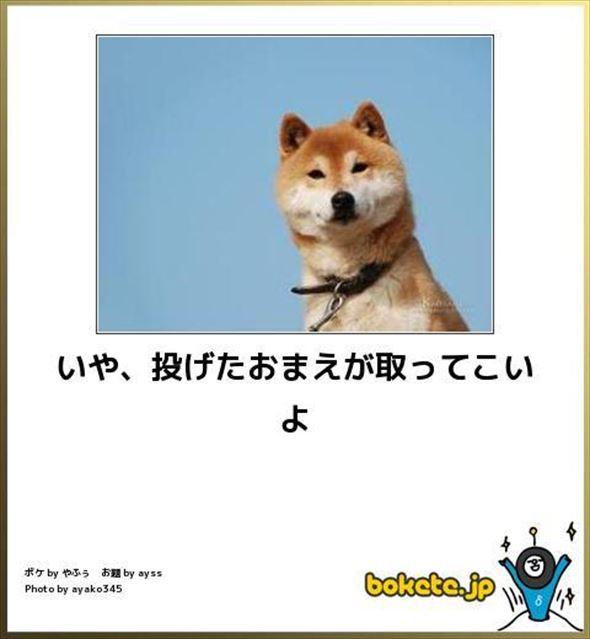 おもしろ犬画像 87