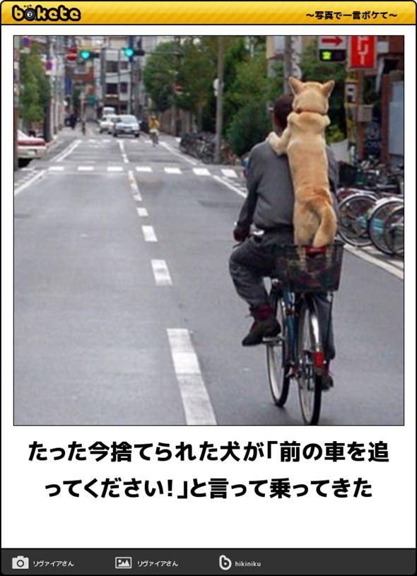 おもしろ犬画像 88
