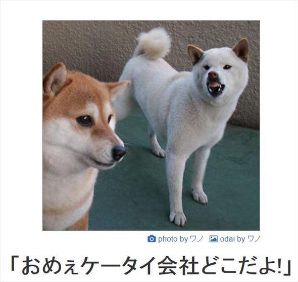 おもしろ犬画像 90