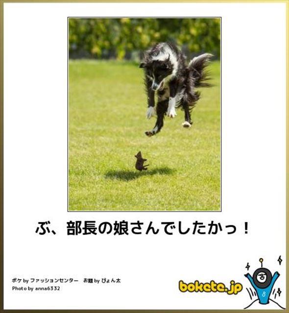 おもしろ犬画像 91