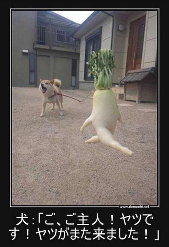 おもしろ犬画像 92