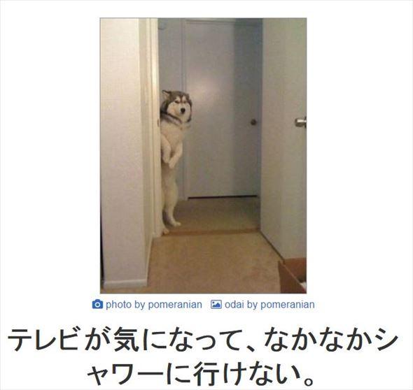 おもしろ犬画像 95