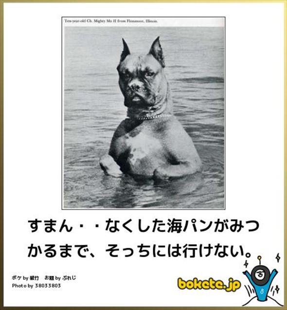 おもしろ犬画像 96