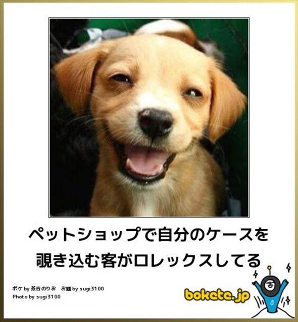 おもしろ犬画像 98