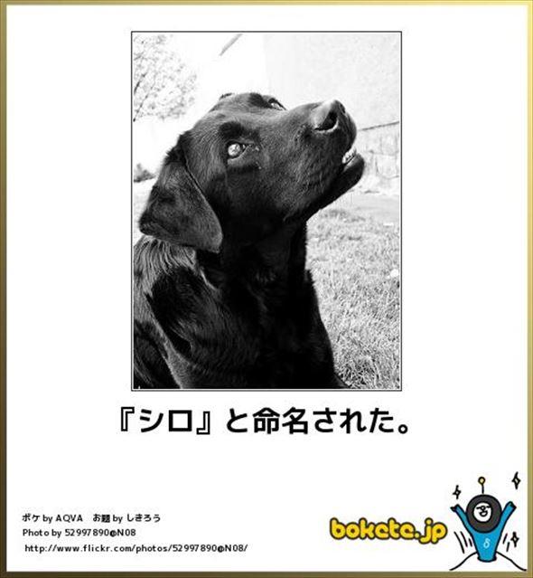 おもしろ犬画像 99