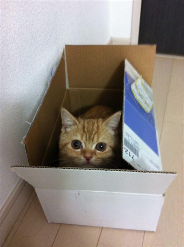 ダンボール猫 17