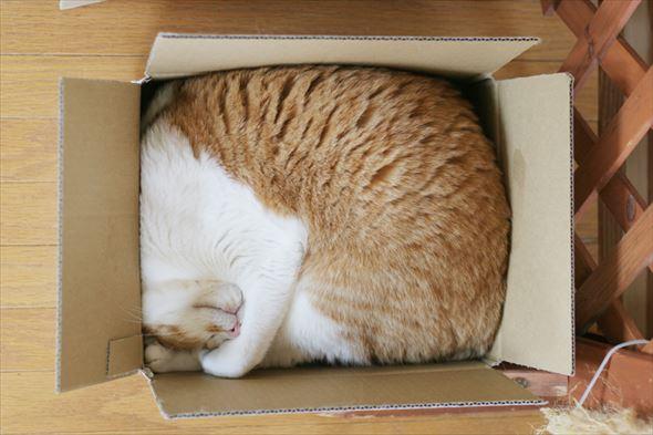 ダンボール猫 21