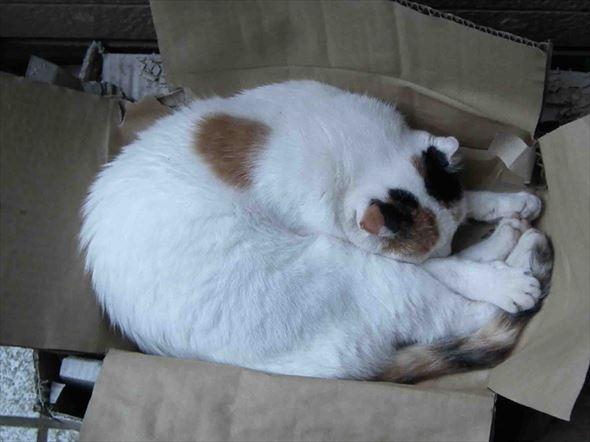 ダンボール猫 24