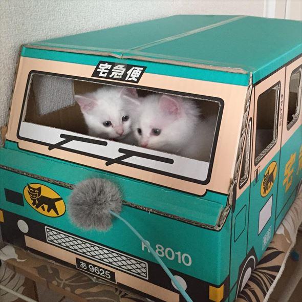 ダンボール猫 30