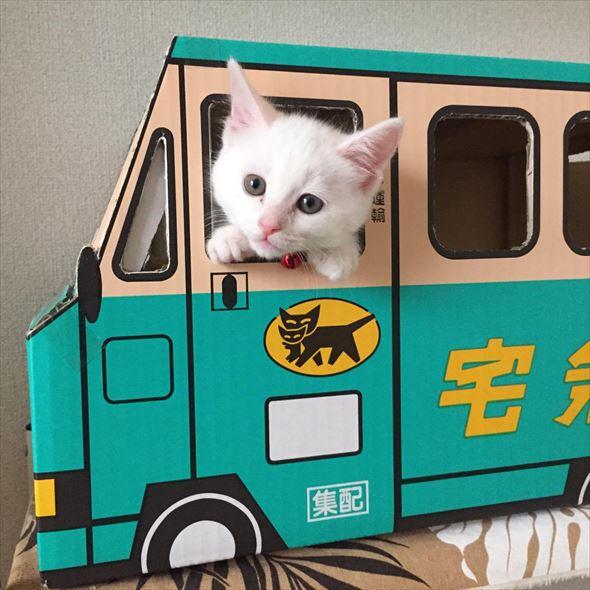 ダンボール猫 31