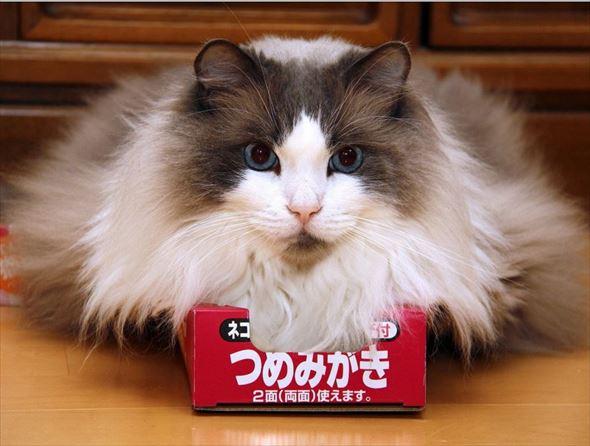 ダンボール猫 34