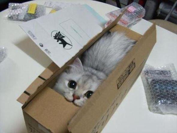 ダンボール猫 4