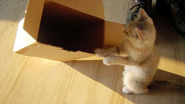 ダンボール猫 48