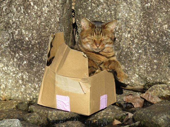ダンボール猫 55