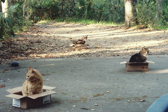 ダンボール猫 6