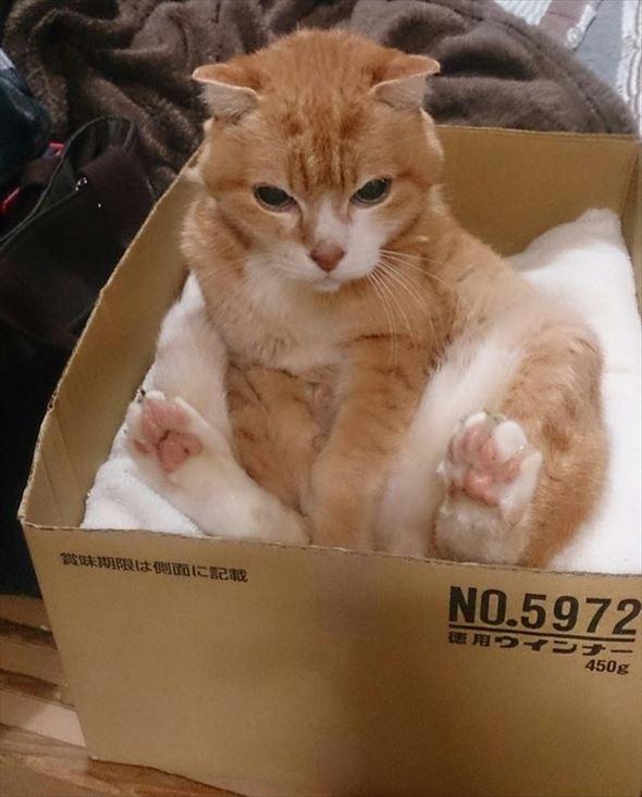 ダンボール猫 68