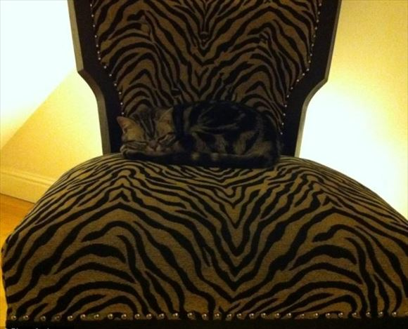 ネコの擬態 19