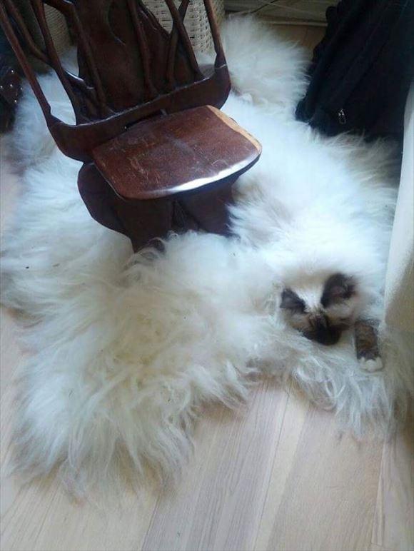 ネコの擬態 45