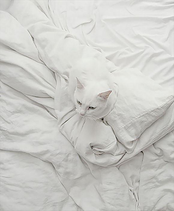 ネコの擬態 46