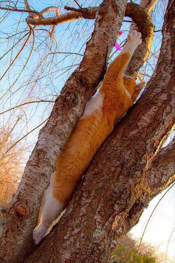 ネコの擬態 56