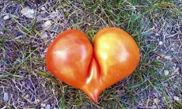 奇形野菜 1