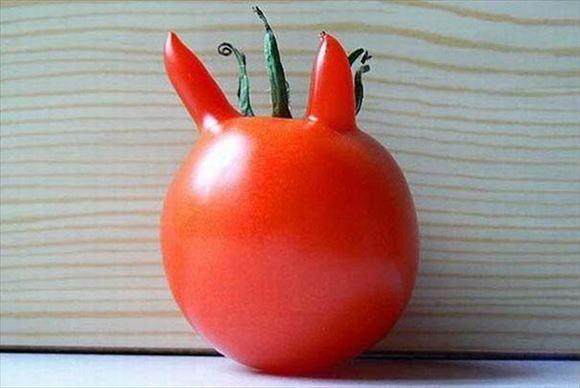 奇形野菜 13