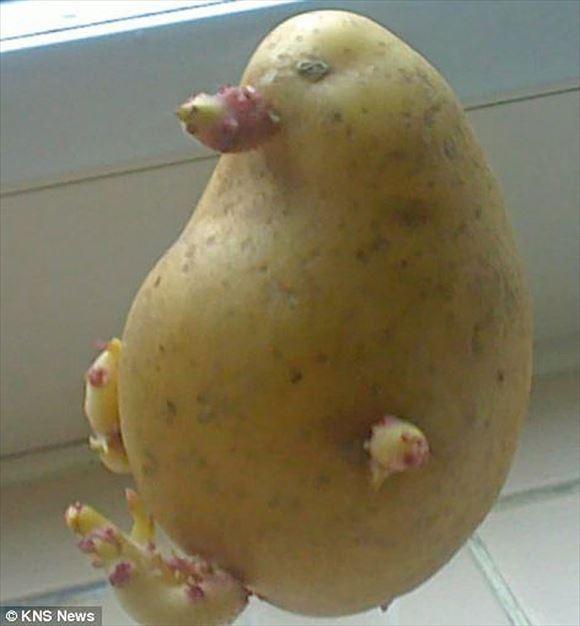 奇形野菜 18