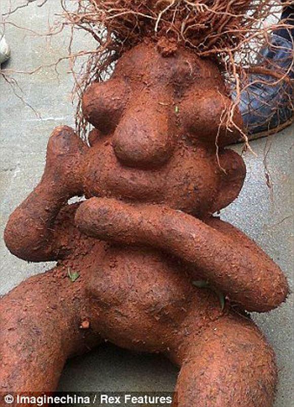 奇形野菜 20