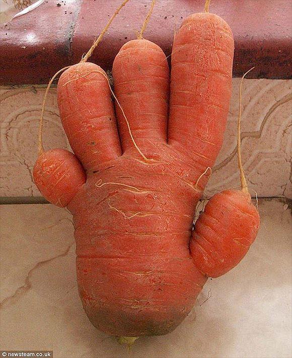 奇形野菜 21